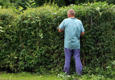 Przydomowy ogród – oaza zdrowia i spokoju